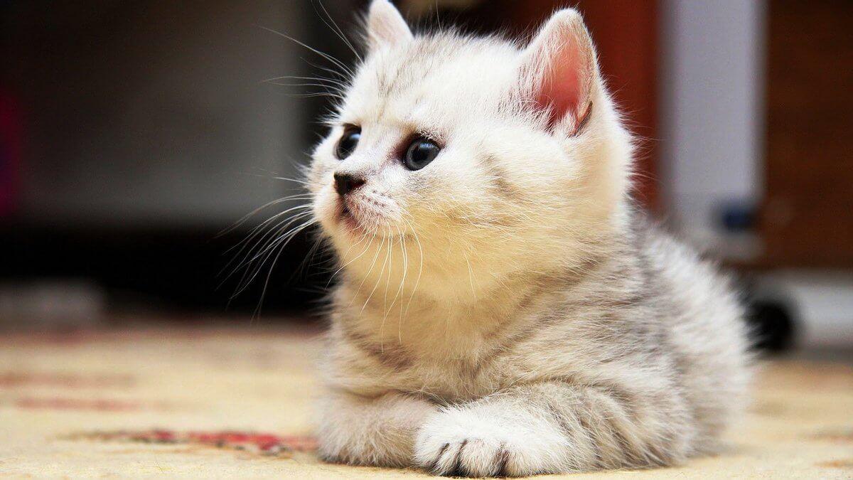 Подборка милых котов и кошек в картинках 19