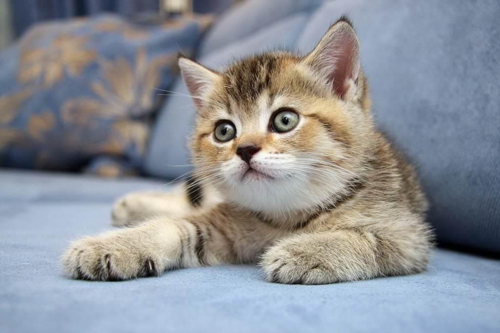 Подборка милых котов и кошек в картинках 21
