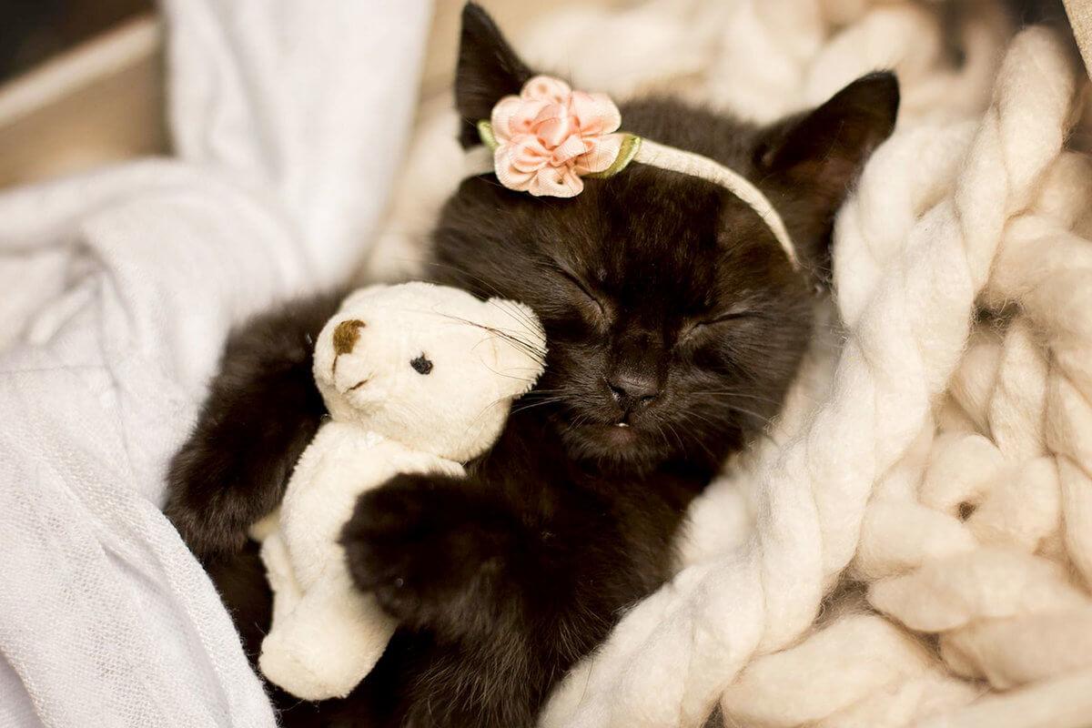 Подборка милых котов и кошек в картинках 22