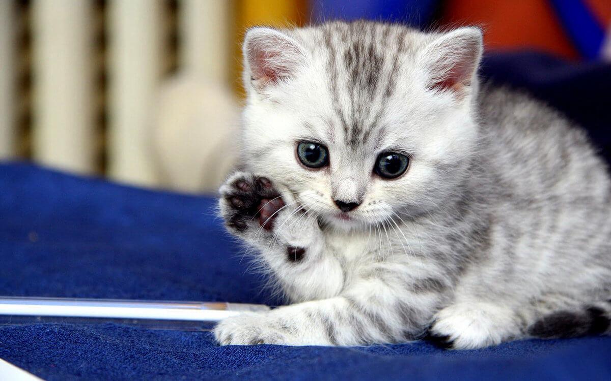 Подборка милых котов и кошек в картинках 23