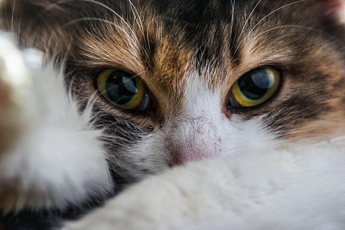 Подборка милых котов и кошек в картинках 24