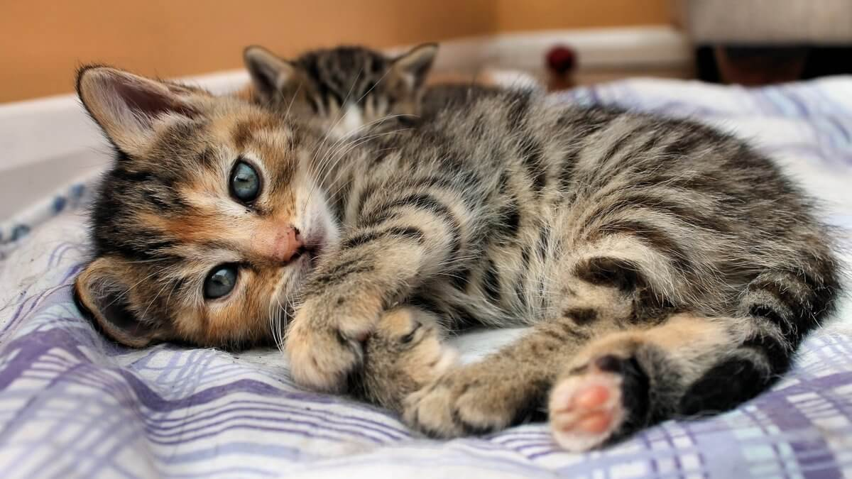 Подборка милых котов и кошек в картинках 25