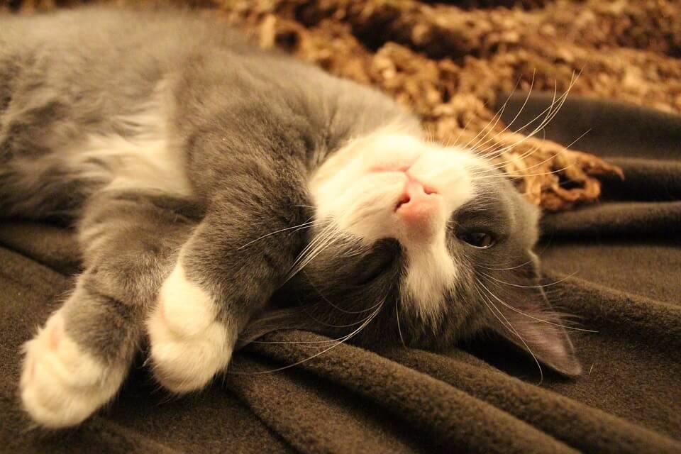 Картинки спящих котов и котиков - самые милые 18