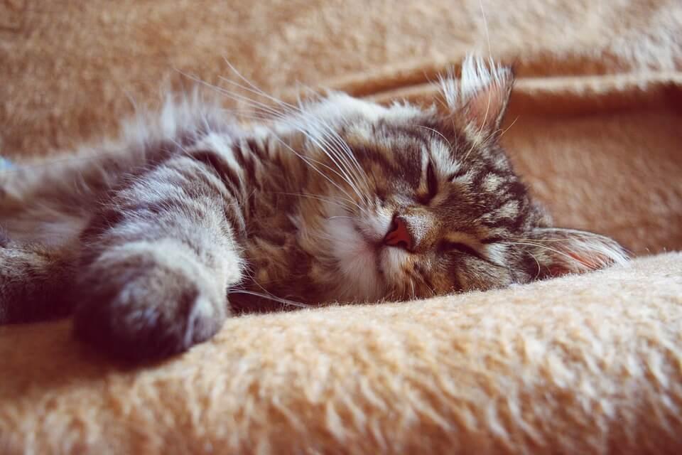 Картинки спящих котов и котиков - самые милые 19