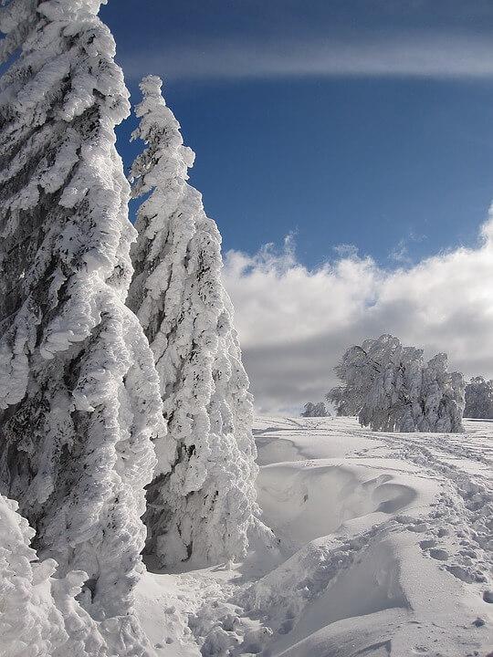 Красивые и невероятные картинки Зимний лес - подборка 4