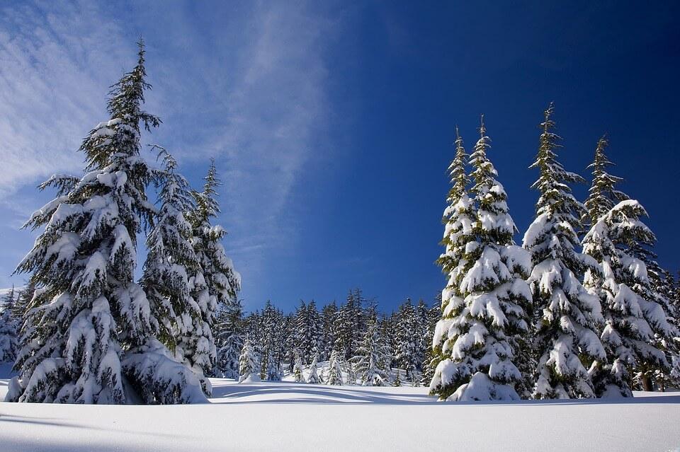 Красивые и невероятные картинки Зимний лес - подборка 5