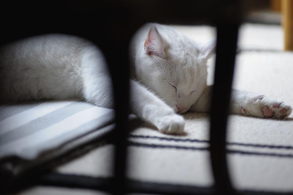 Картинки спящих котов и котиков - самые милые 20