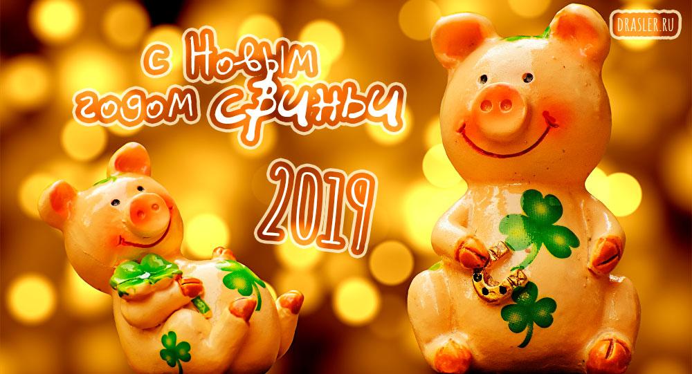 Красивые картинки с Новым годом свиньи 2019 - поздравления 21