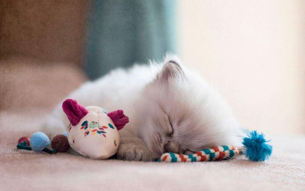 Кошки, котята, коты картинки в новый год - самые красивые 4