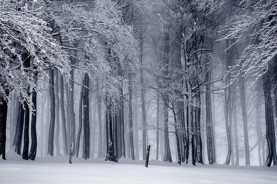 Красивые и невероятные картинки Зимний лес - подборка 8