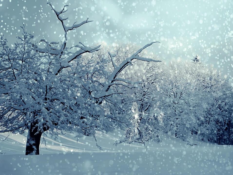 Красивые и невероятные картинки Зимний лес - подборка 9