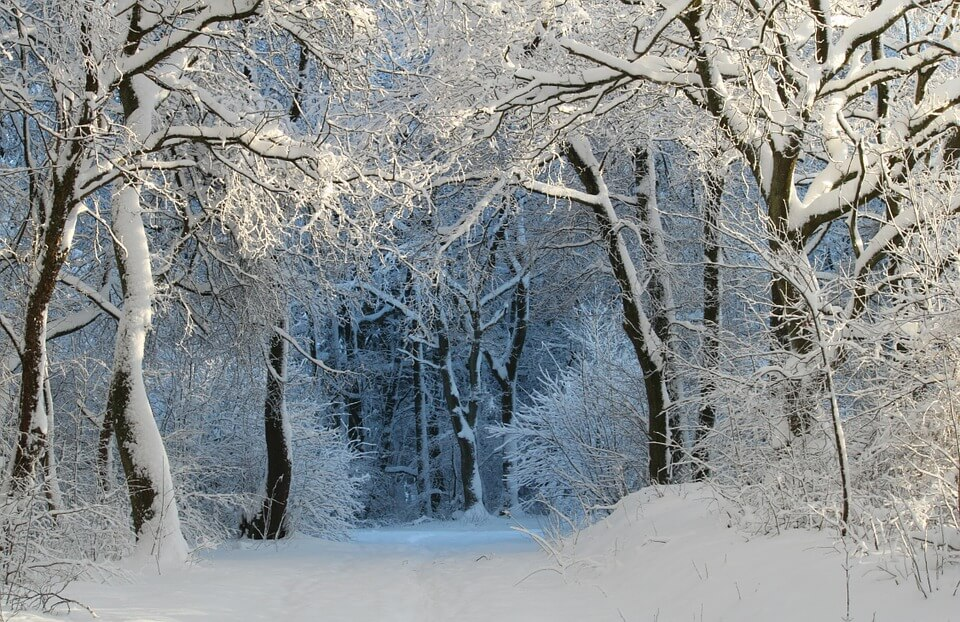Красивые и невероятные картинки Зимний лес - подборка 7