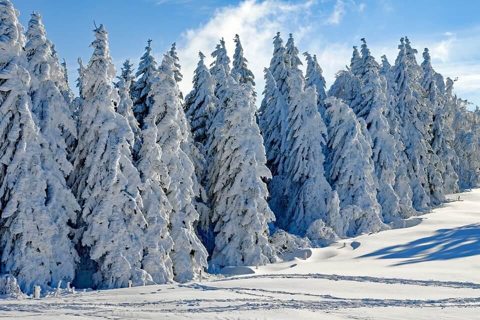 Красивые и невероятные картинки Зимний лес - подборка 11