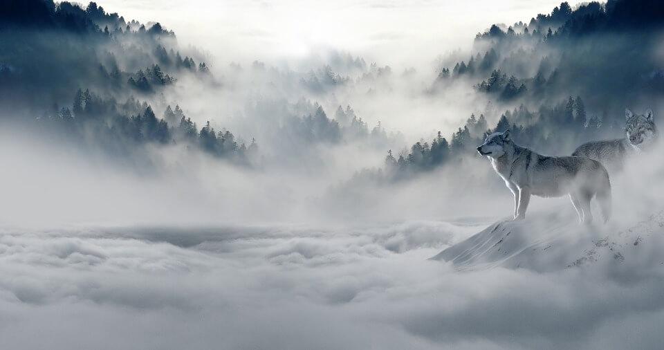 Красивые и невероятные картинки Зимний лес - подборка 12