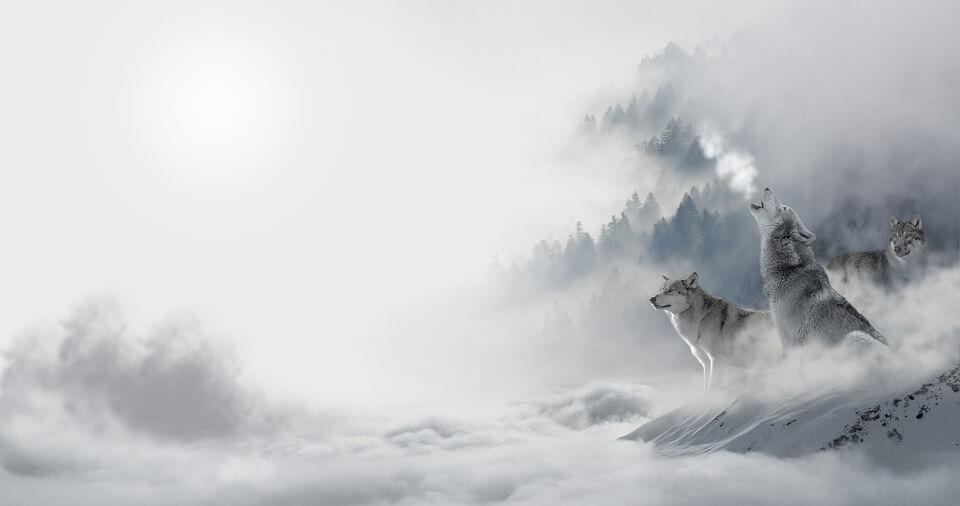 Красивые и невероятные картинки Зимний лес - подборка 13