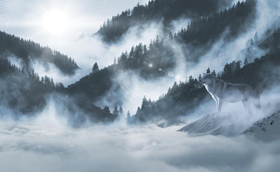 Красивые и невероятные картинки Зимний лес - подборка 14