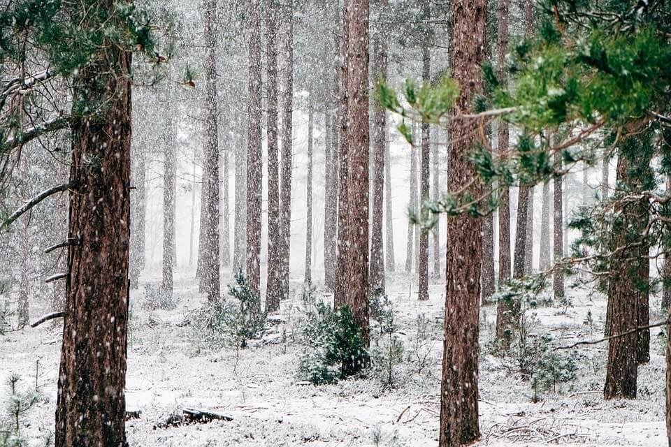 Красивые и невероятные картинки Зимний лес - подборка 15