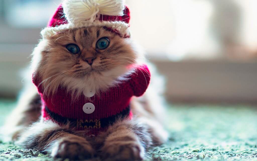 Кошки, котята, коты картинки в новый год - самые красивые 2