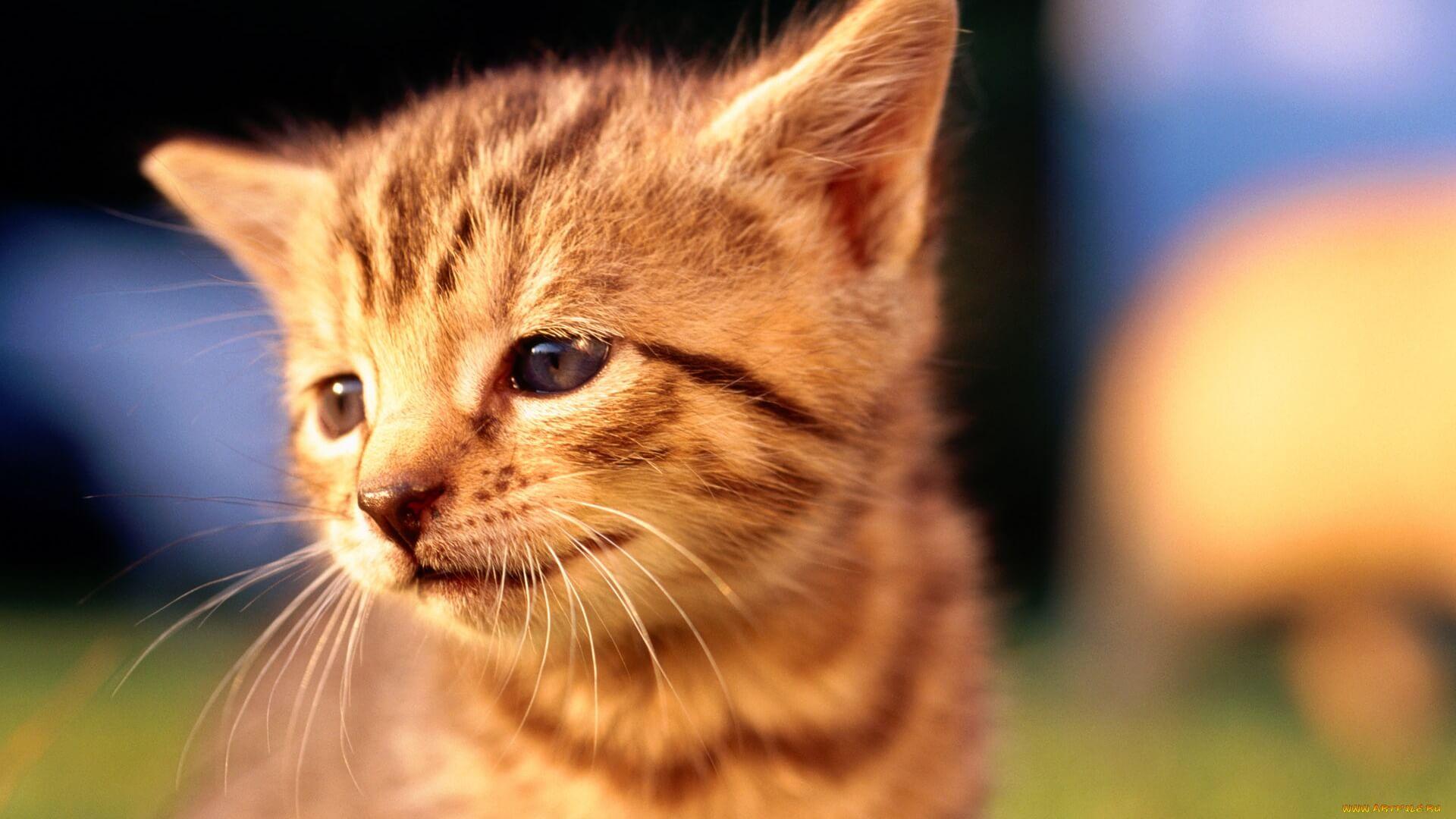 Подборка милых котов и кошек в картинках 30