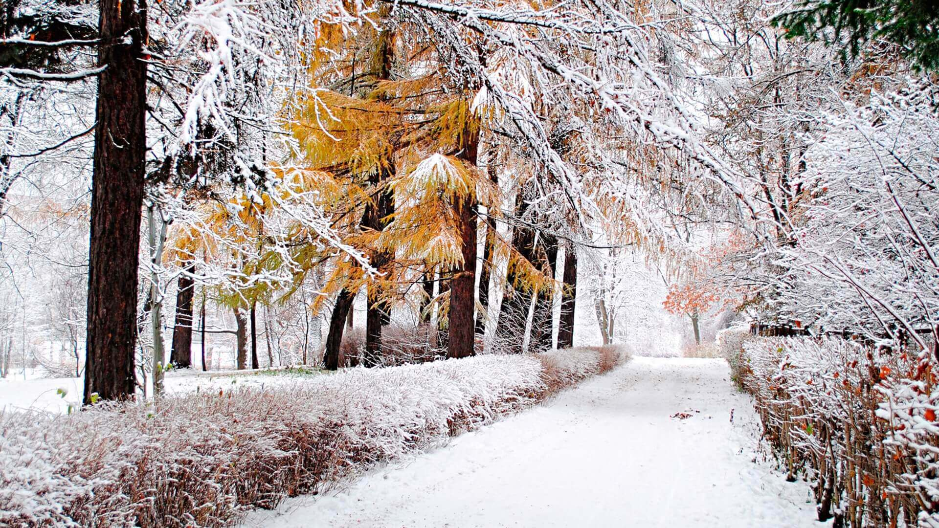 Красивые картинки на заставку про зиму и снег - подборка 1