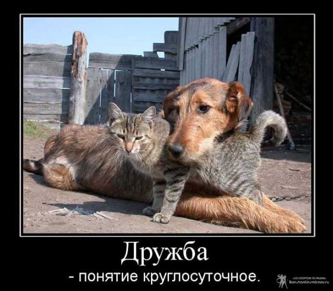 Картинки про друзей и дружбу со смыслом - 29 штук 2