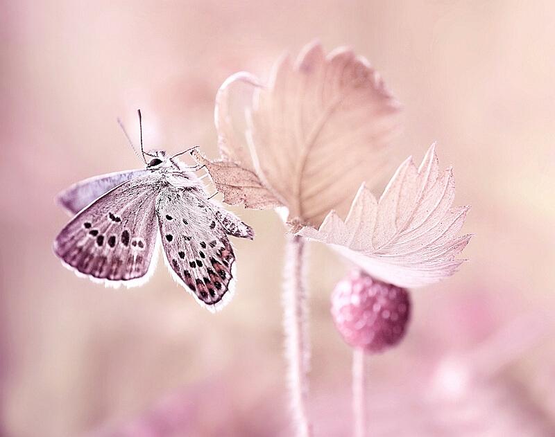 Нежные и милые картинки, изображения - подборка 25 фото 9