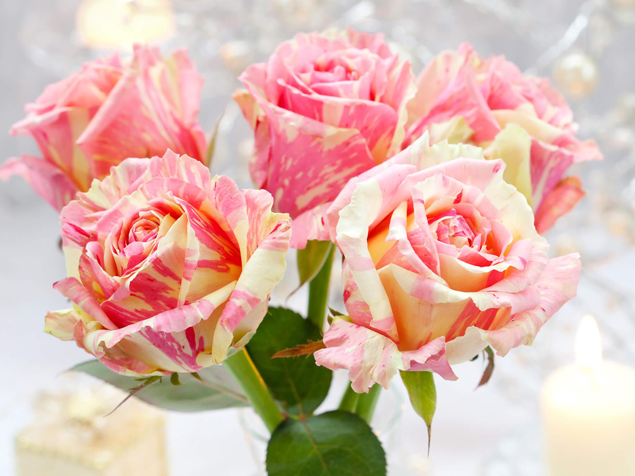 Удивительные картинки с розами, интересная сборка 27 фото 24
