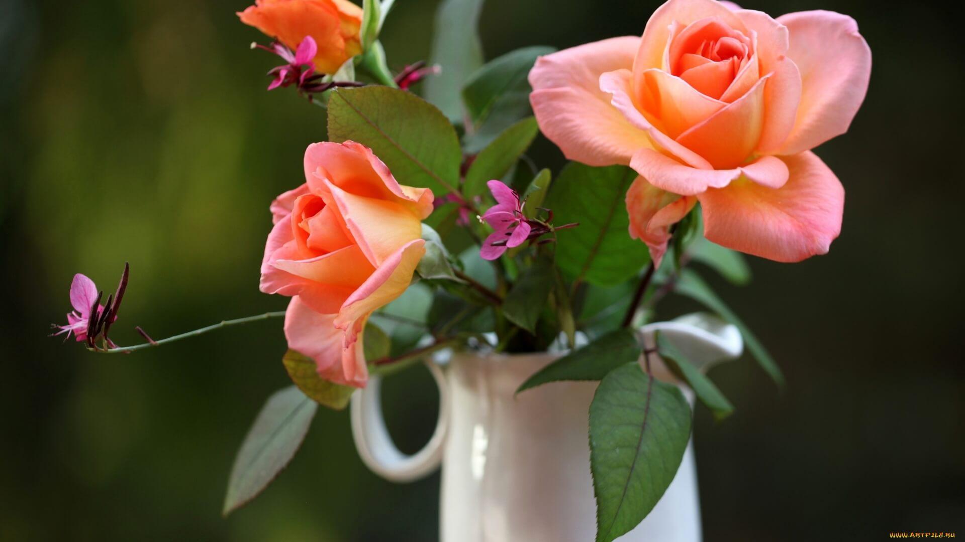 Удивительные картинки с розами, интересная сборка 27 фото 15