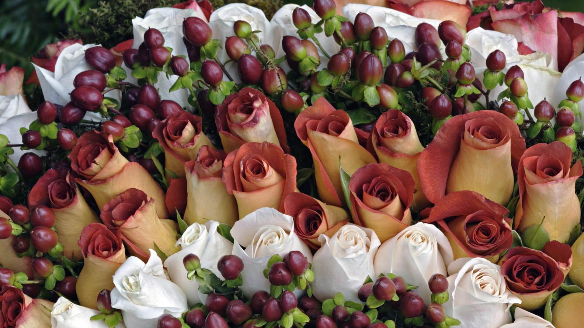 Удивительные картинки с розами, интересная сборка 27 фото 17
