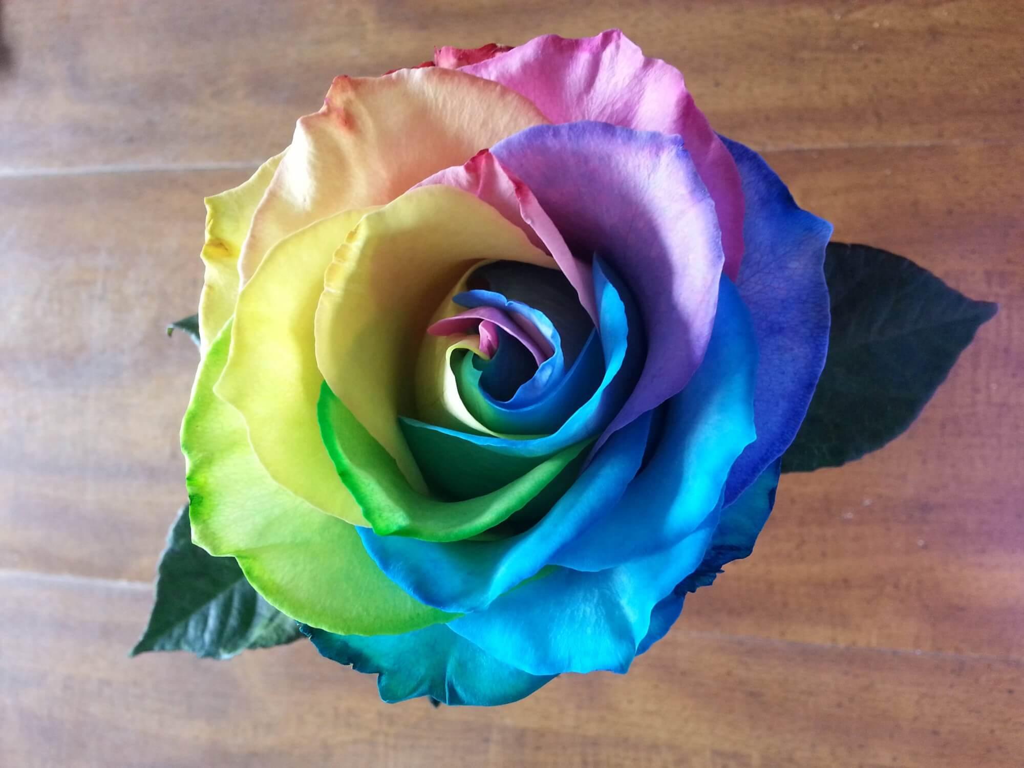 Удивительные картинки с розами, интересная сборка 27 фото 20