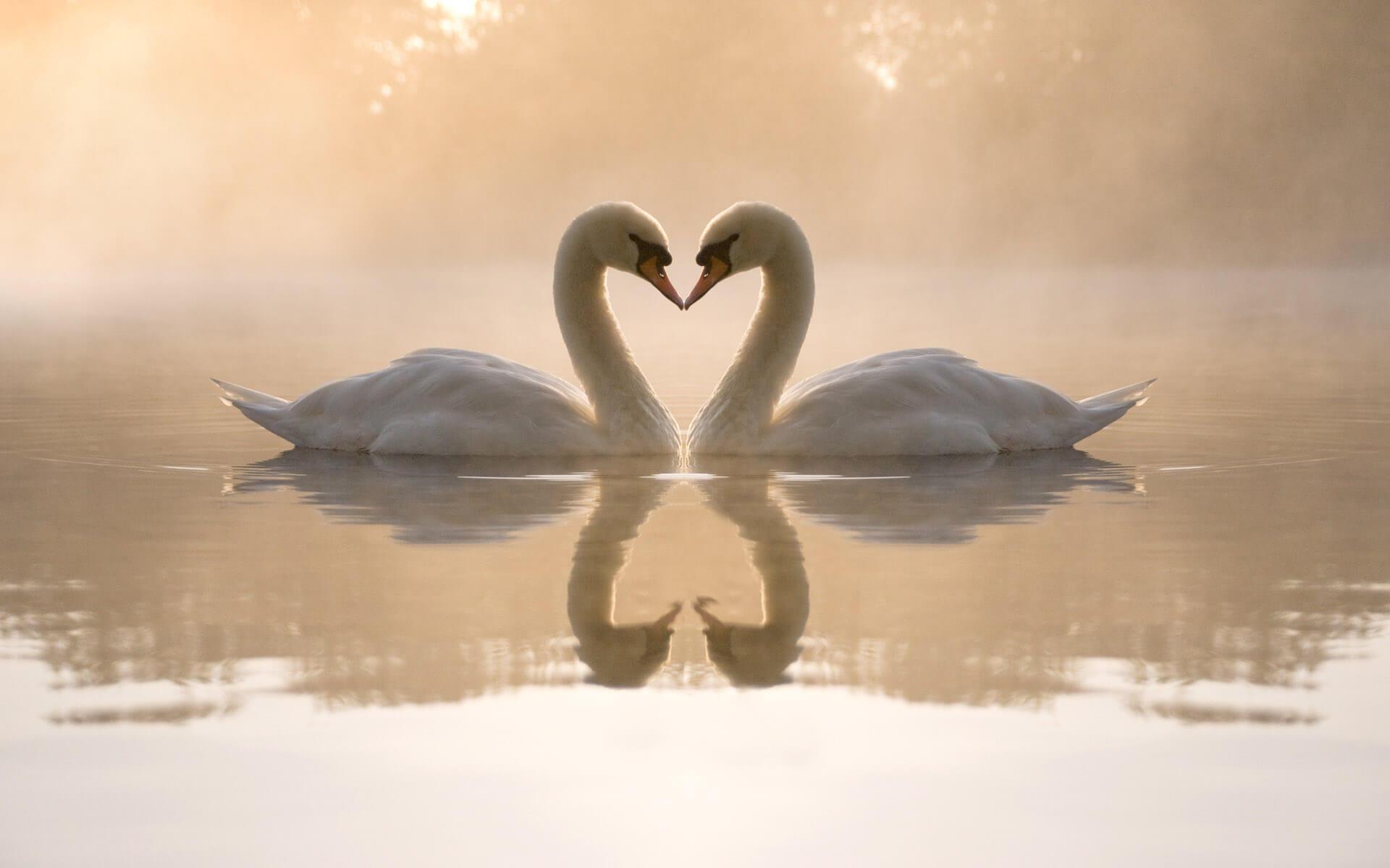 Милые и романтические картинки для любимой - скачать (20 фото) 13