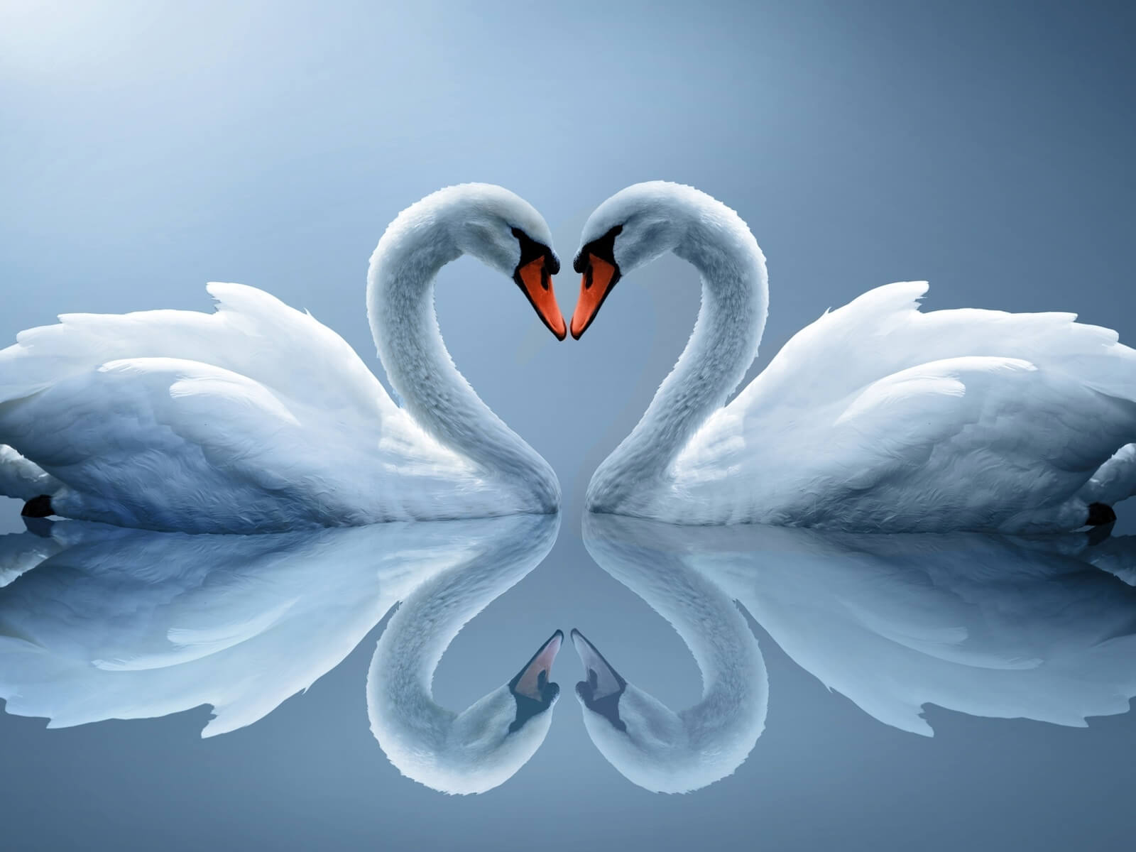 Милые и романтические картинки для любимой - скачать (20 фото) 14