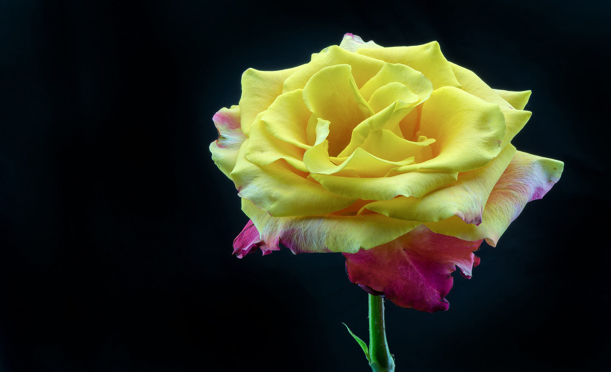 Удивительные картинки с розами, интересная сборка 27 фото 26