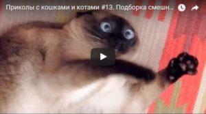 Смешные и ржачные видео про котов - новые, свежие, прикольные