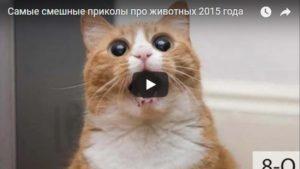 Смешные и лучшие видео приколы про животных и зверей - подборка