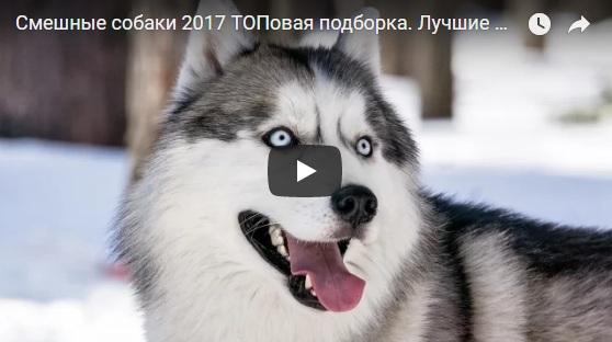 Смешные и прикольные видео про собак - новая и свежая подборка