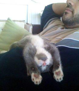 Смешные картинки про котов и котиков - смотреть подборку бесплатно 12
