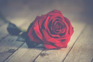 Красивые и прикольные картинки роз - удивительная подборка 12