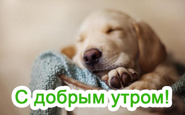 Картинки с добрым утром смешные с животными с надписями