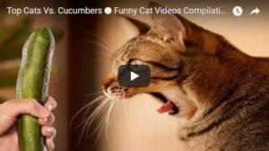 Смешные и ржачные видео про кошек - самые забавные и веселые