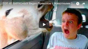 Топ видео приколов про животных до слез - самая смешная и веселая подборка