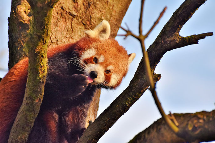 Удивительные и красивые картинки, фото животных - лучшая коллекция 11