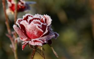 Красивые-зимние-картинки-природы-и-растений---лучшие-изображения-12