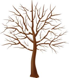Красивые картинки дерево без листьев - скачать бесплатно для детей 13
