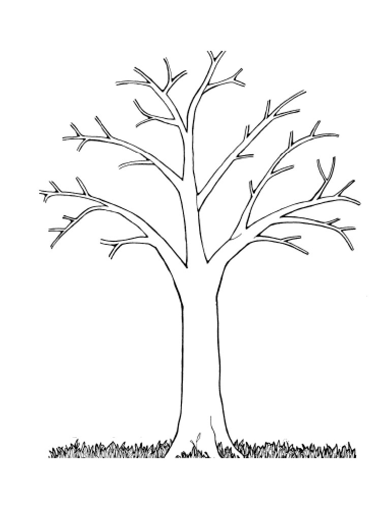 постоянно растущей картинка контур березы без листьев нас можно