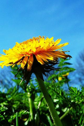 Скачать картинки на телефон цветы и букеты - самые прекрасные 15