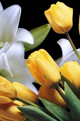 Скачать картинки на телефон цветы и букеты - самые прекрасные 16