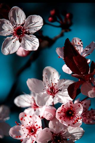 Скачать картинки на телефон цветы и букеты - самые прекрасные 3