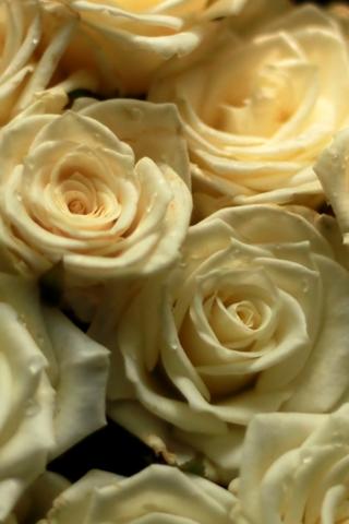 Скачать картинки на телефон цветы и букеты - самые прекрасные 6