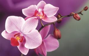 Цветочки-картинки-прикольные-и-красивые---интересная-сборка-2